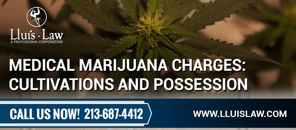 top marijuana lawyers